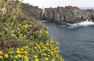 秋の城ヶ崎海岸