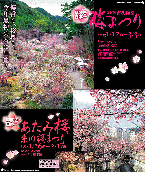 熱海桜 糸川桜まつりのご案内